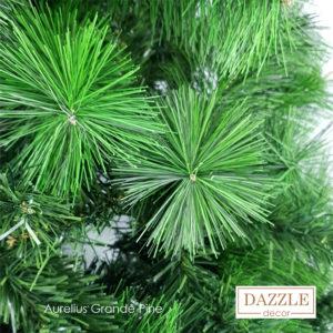 Aurelius Grande Pine tree